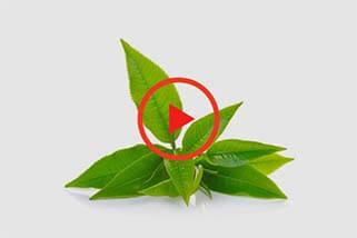 sumitomo naturedeep for tea crop